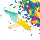 个奇鸽软件下载
